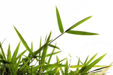 green grass Stock Photo - 9390192