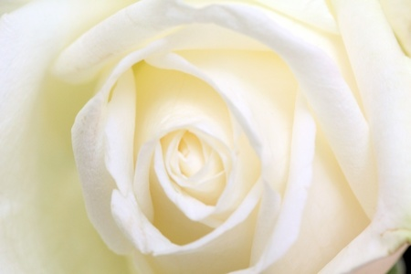 funeral background: Rose