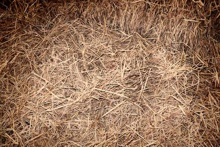 hay: Hay background Stock Photo