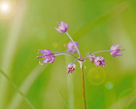 grass flower with oil paint vintage background photo