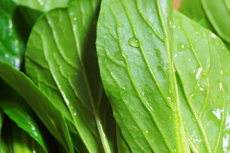 leafy: Green leafy vegetables from Japan