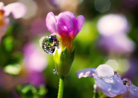 seson: close up Water drops on pink flower
