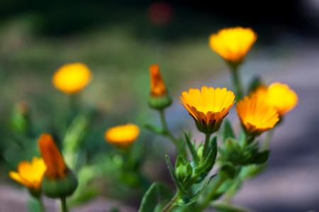 sprig: Orange flowers in a Japanese garden on sprig time