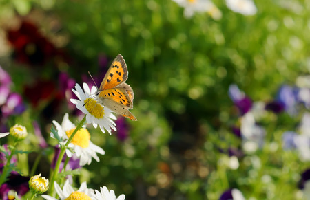 Beautiful flowers in the spring with a lovely butterfly. photo