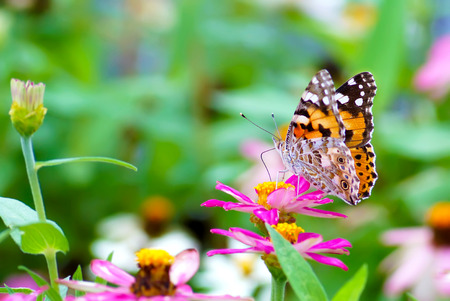 close up butterfly on flower, Japan