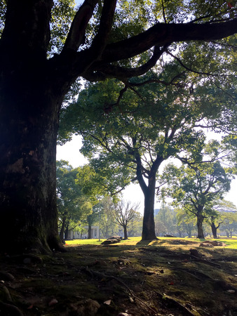 luscious: crisply morning sun and powerful luscious green trees in japan park
