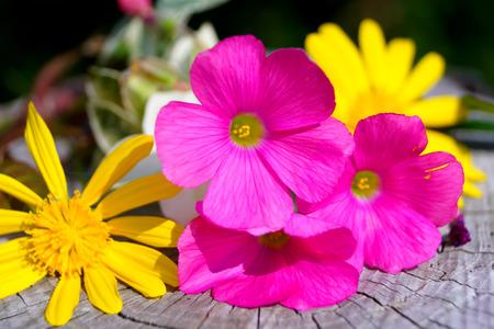 color in: flores de color rosa y amarillo en oto�o, el color en oto�o