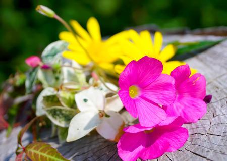 colour in: flores de color rosa en otoño, el color en otoño Foto de archivo