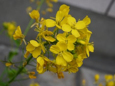 Close up lovely flower in garden