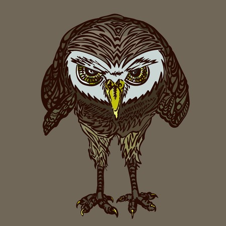 birds eye view: evil owl with yellow eyes