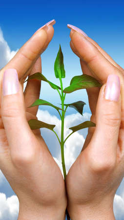 Hands holding a small plant Stock Photo