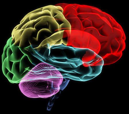 anatomy brain: X-ray image of a human head brain