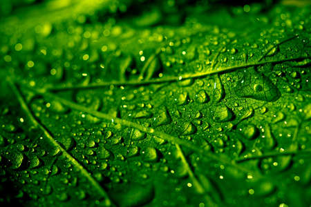 Close-up of water-drops on leaf surface photo