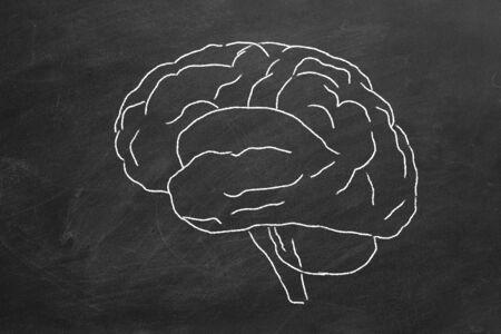 Chalk drawn human brain  on a blackboard.