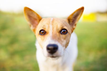 Dog s eyes portrait closeup photo