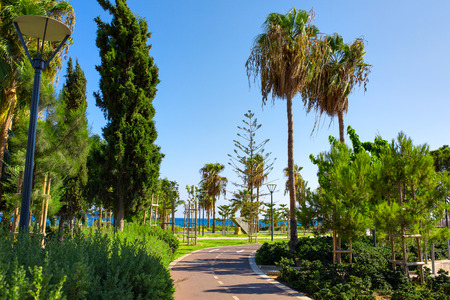 Empty cycling track along the park near the Mediterranean sea photo