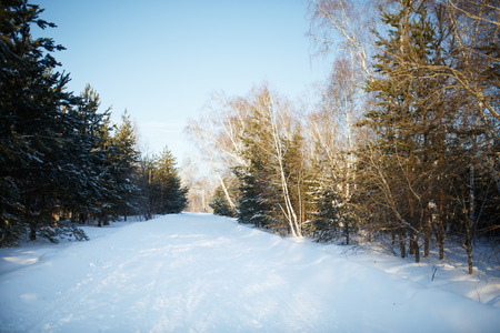 snow road: Snow road in the winter forest Stock Photo