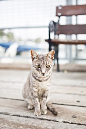 emaciated: Sad grey tabby cat sitting at the street.