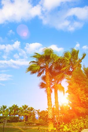 Palm trees tropical garden photo