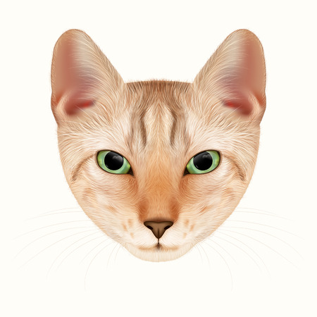 red cat: Vector Portrait of Cat. Red Tabby Kitten, Hand-drawn Illustration.