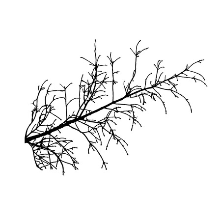bareness: Branch tree isolated. Vector illustration.
