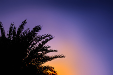 palmate: Silhouette of palm leaves over sunset sky. Tropical background.