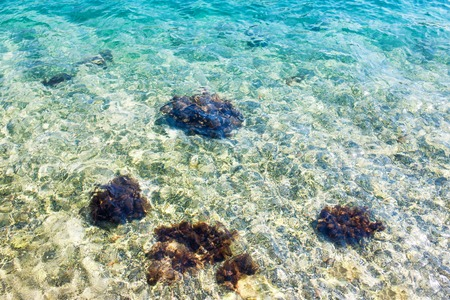 algal: Clear blue transparent water with mussels on the rocks