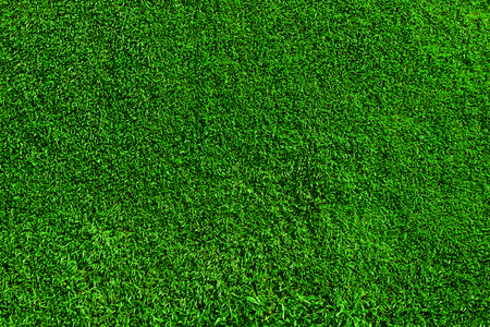 Field of fresh green grass texture as a background, top close up view, horizontal Banco de Imagens