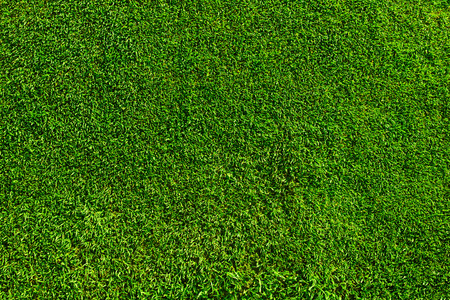 Green football or golf course field grass