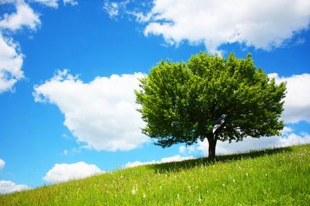 dead wood: lonely tree