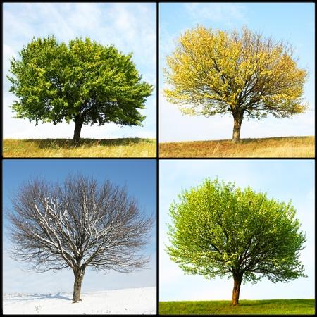 allen: alleen boom in voor het seizoen