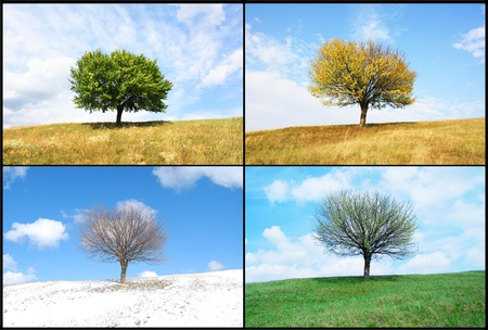 four season: alone tree in for season Stock Photo