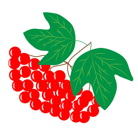 guelder rose: Viburnum cartoon sign. Isolated bunch red berry on white background. Sumbol health. Bright bush guelder rose. Flat vector image. Vector illustration