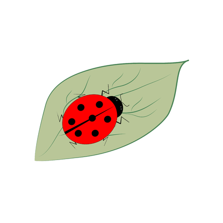 insect on leaf: Ladybird isolated on leaf. Illustration ladybug on white background. Cute colorful sign red insect symbol spring, summer, garden. Template for t shirt, apparel, card, poster Design element Vector illustration Illustration