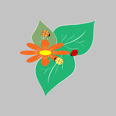 Ladybird isolated. Illustration ladybug on gray background. Cute colorful sign red insect symbol spring, summer, garden. Template for t shirt, apparel, card, poster Design element Vector illustration Illustration