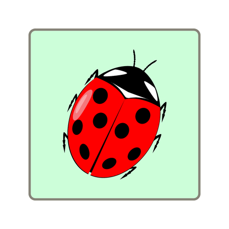 Ladybird isolated. Illustration ladybug in green square. Cute colorful sign red insect symbol spring, summer, garden. Template for t shirt, apparel, card, poster Design element Vector illustration Illustration