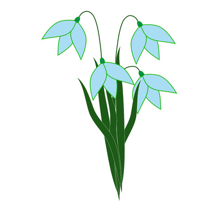 Snowdrop flower isolated. Illustration floret on white background. Cute delicate sign symbol spring. Colorful template for prints, textiles, wrapping, wallpaper. Design element Vector illustration