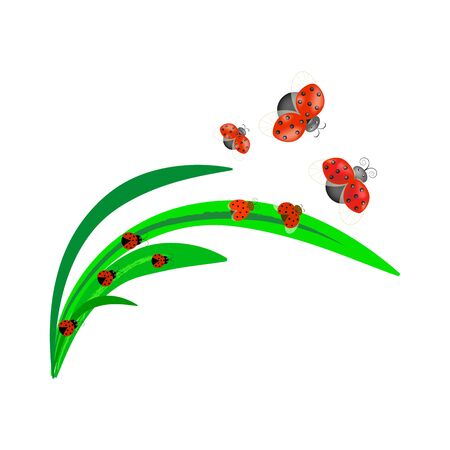 Ladybirds set. Illustration ladybug. Cute colorful sign red insect symbol spring, summer, garden. Template for t shirt, apparel, card, poster, etc. Design element Vector illustration