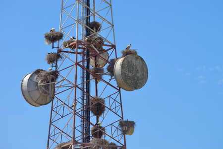 dowdy: Communications tower blue sky