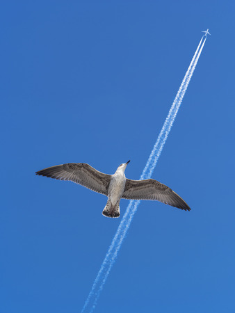 Seagull bird dreams of becoming an airplane