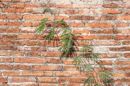 vine on brick wall background