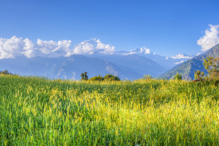 green meadow of annapurna circuit nepal