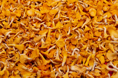 Pile of mushrooms at the street market