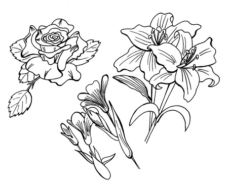 Doodle hand drawn flowers in black and white. Coloring book vector elements - Vector file Çizim