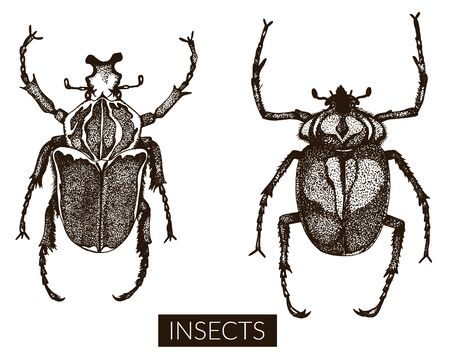 collection of hand drawn insect illustrations. Entomological sketch set.