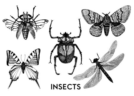 Set of insects in vintage hand drawn style. Macro entomological set. Sketched hand drawn creatures set - Vector 向量圖像