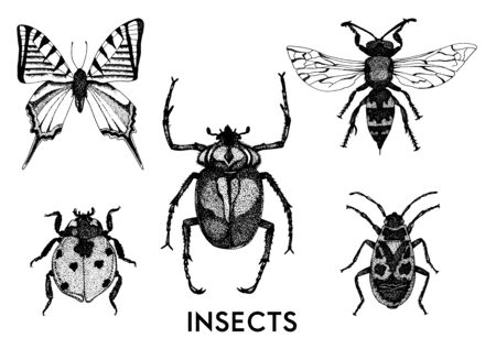Vector collection of hand drawn insect illustrations. Entomological sketch set. 向量圖像