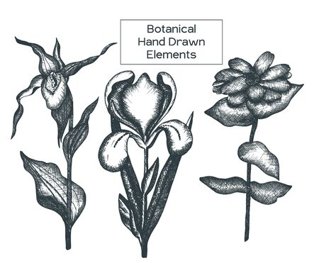 Black and white outline flower illustration. Set of Decorative ornamental flowers for printing on t-shirts or coloring books.