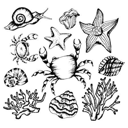 Conjunto ilustrado dibujado a mano de criaturas submarinas monocromas. Varios bocetos de criaturas marinas. Ilustración de vector
