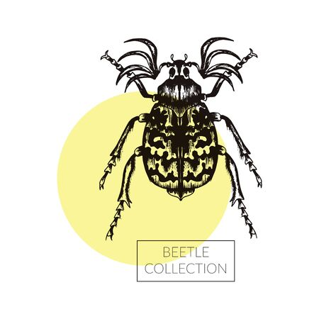 Beetle Hand Drawn Vector Illustration For Tattoo Design. Engraving Insect Art